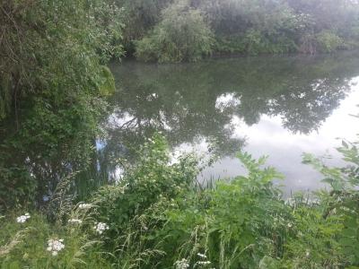 Klinkerwerk teich berlstedt anglerverein unstrut 90 e v for Fischbesatz teich
